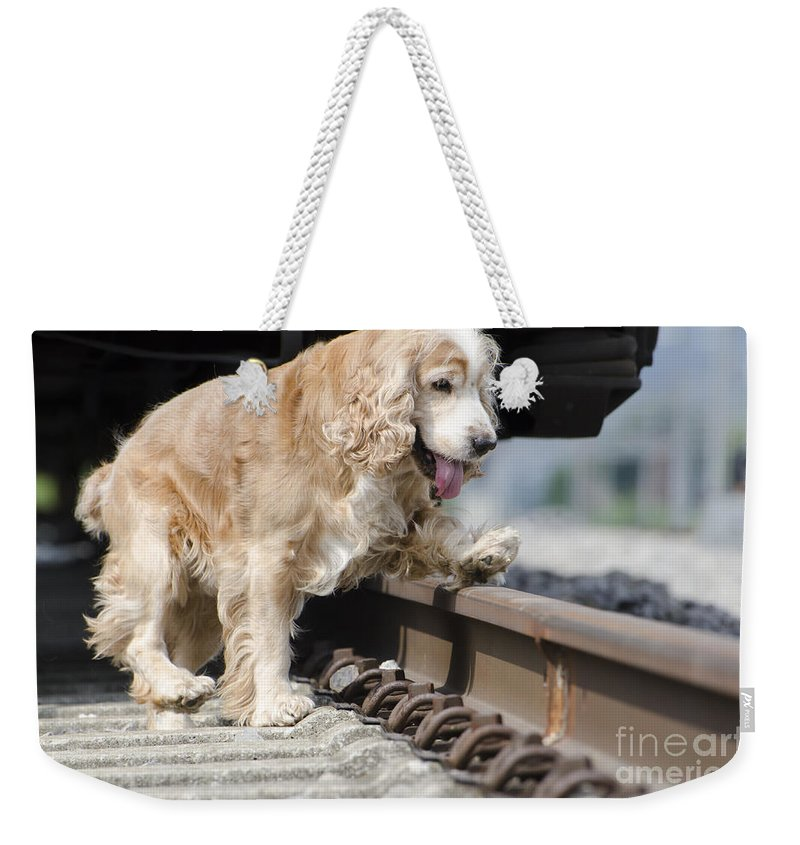 Dog Weekender Tote Bag featuring the photograph Dog Walking Over Railroad Tracks by Mats Silvan