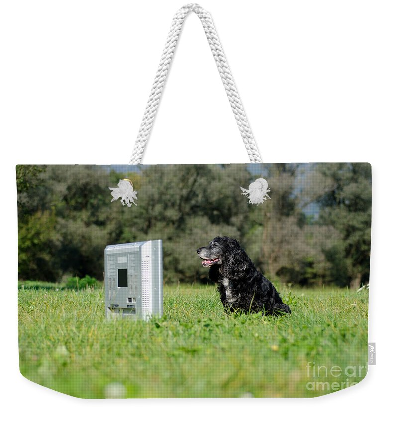 Dog Weekender Tote Bag featuring the photograph Dog Watching Tv by Mats Silvan