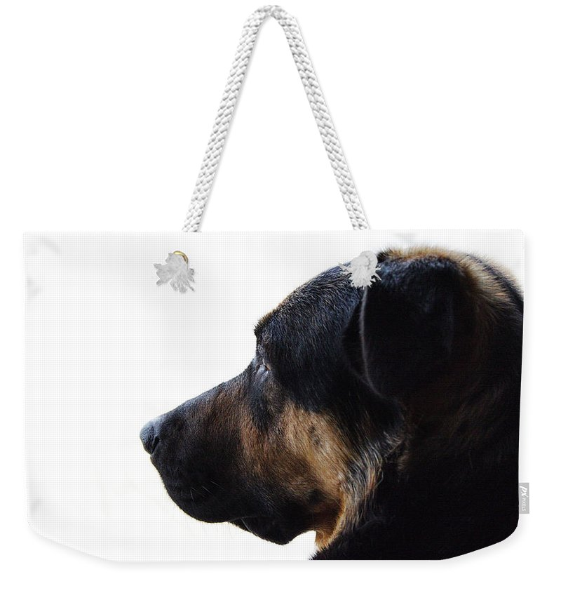 Dog Weekender Tote Bag featuring the photograph Doggie Daydreams by Jeff Galbraith