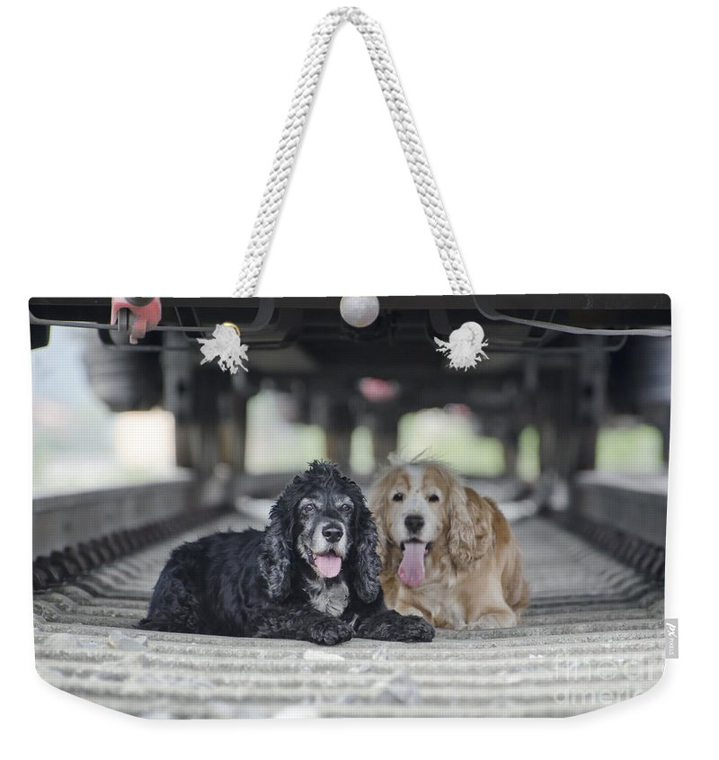 Dogs Weekender Tote Bag featuring the photograph Dogs Lying Under A Train Wagon by Mats Silvan