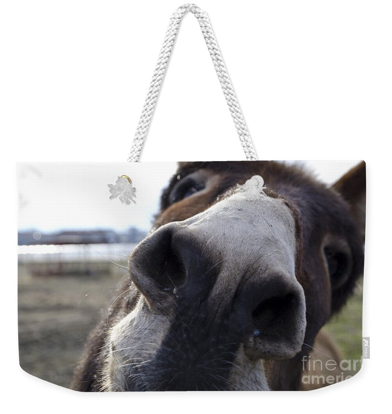 Donkey Weekender Tote Bag featuring the photograph Donkey by Mats Silvan