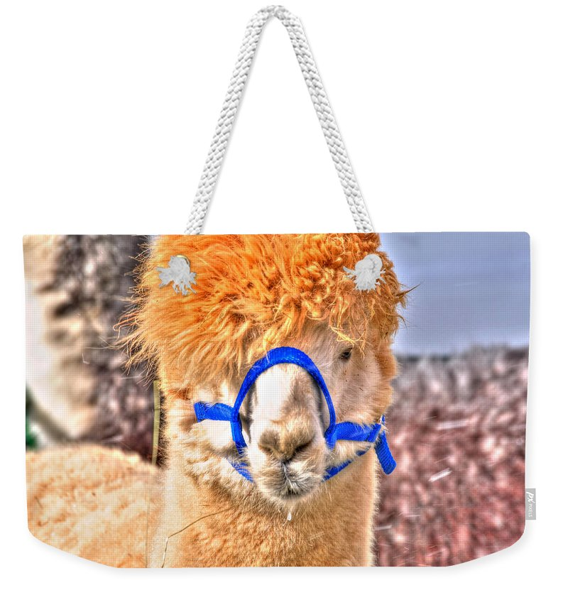 Weekender Tote Bag featuring the photograph Don't Hate Me Cuz I Am Beautiful by Michael Frank Jr
