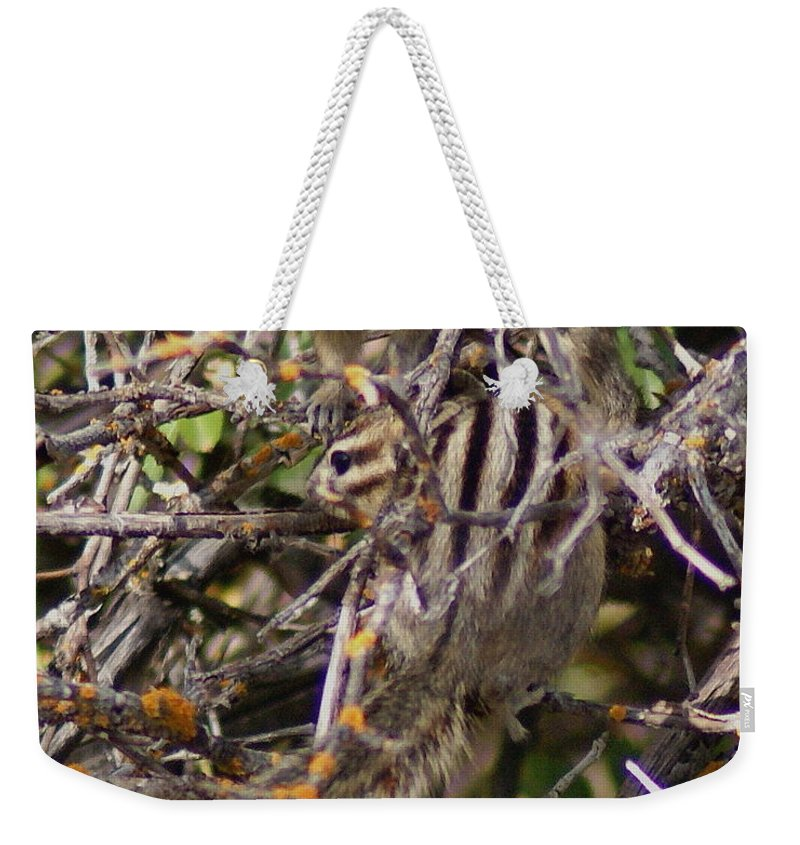 Chipmunks Weekender Tote Bag featuring the photograph Dos Munks by Ben Upham III