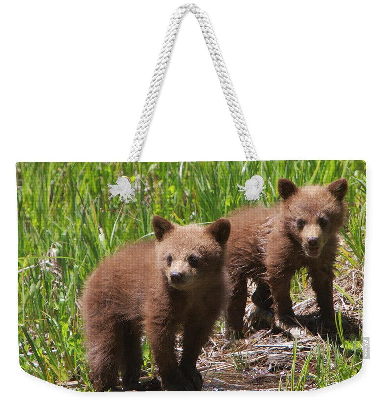 Bears Weekender Tote Bag featuring the photograph Double Trouble by Bruce J Robinson