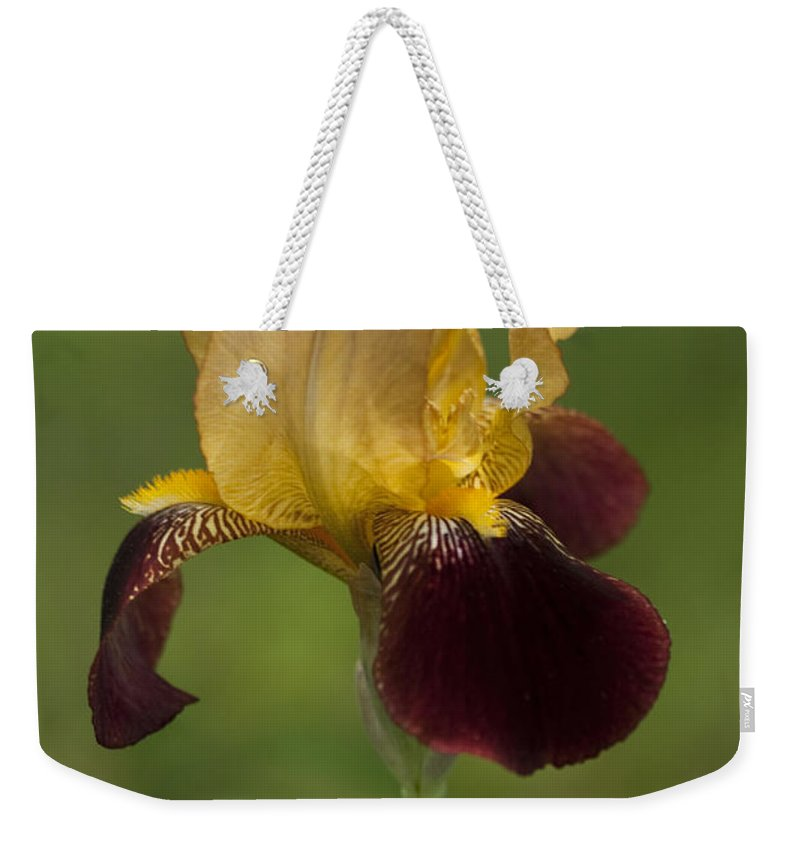 Iris Weekender Tote Bag featuring the photograph Down Home Two-tone Iris by Kathy Clark