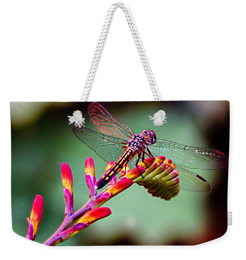 Dragon Fly Weekender Tote Bag featuring the photograph Dragon Fly by Jean Noren