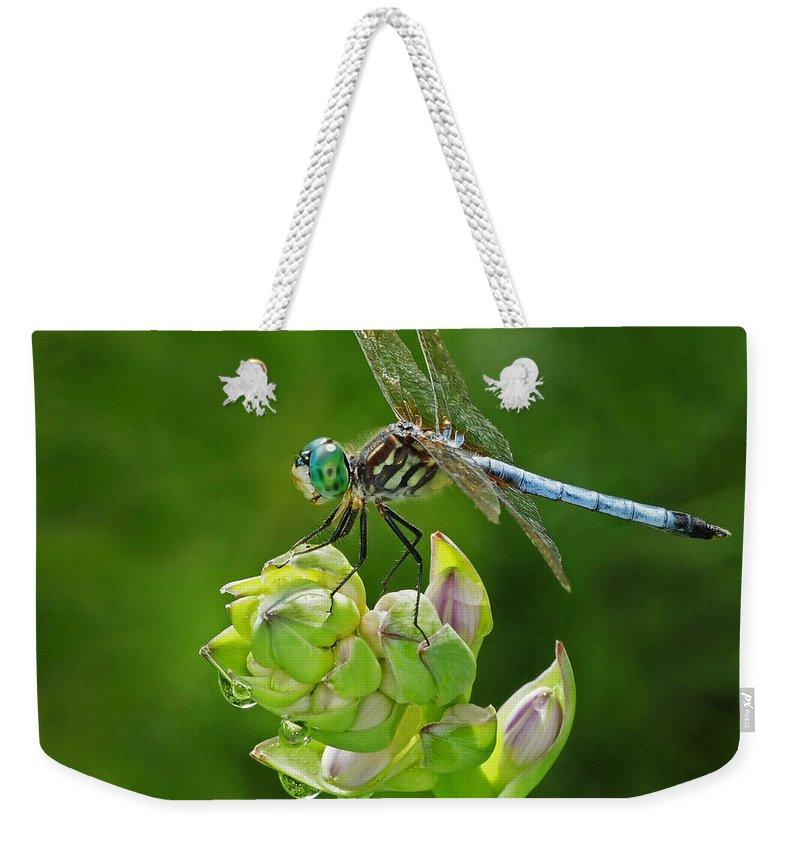 Dragonfly Weekender Tote Bag featuring the photograph Dragonfly by Dave Mills