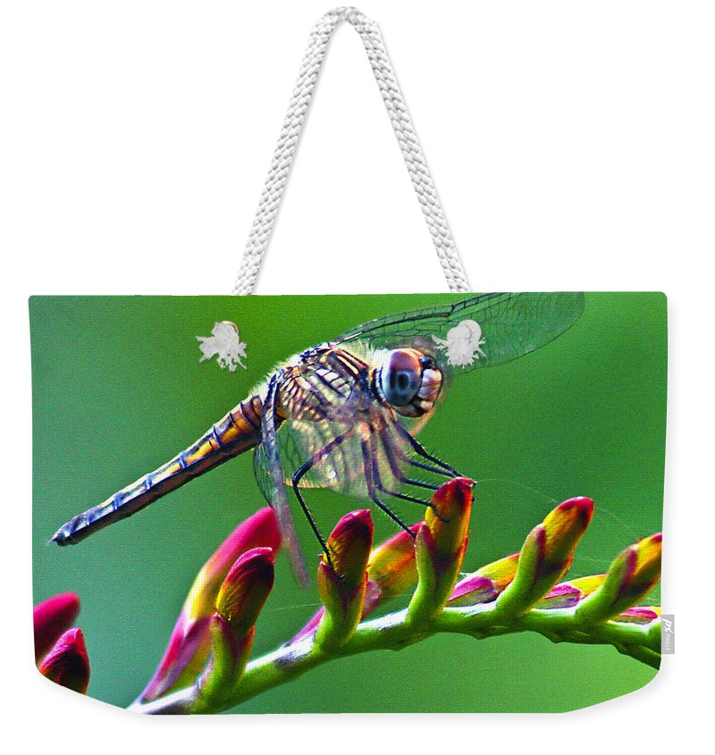Animals Weekender Tote Bag featuring the photograph Dragonfly by Jean Noren