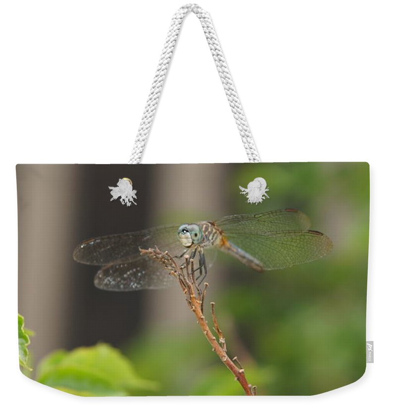 Dragonfly Weekender Tote Bag featuring the photograph Dragonfly Smile by Megan Cohen