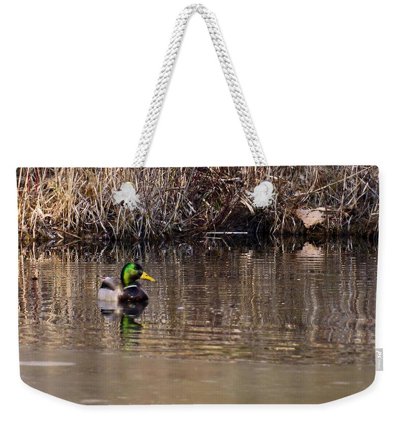 Usa Weekender Tote Bag featuring the photograph Drake In The Pond by LeeAnn McLaneGoetz McLaneGoetzStudioLLCcom