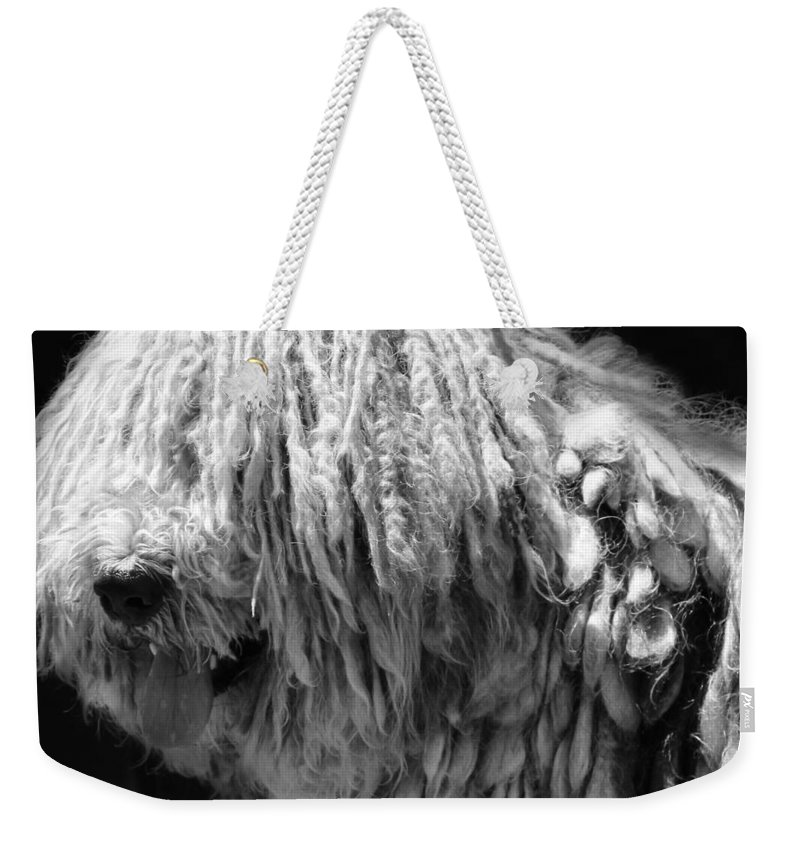 Bergamasco Weekender Tote Bag featuring the photograph Dreadlock Dog by Andrew Fare