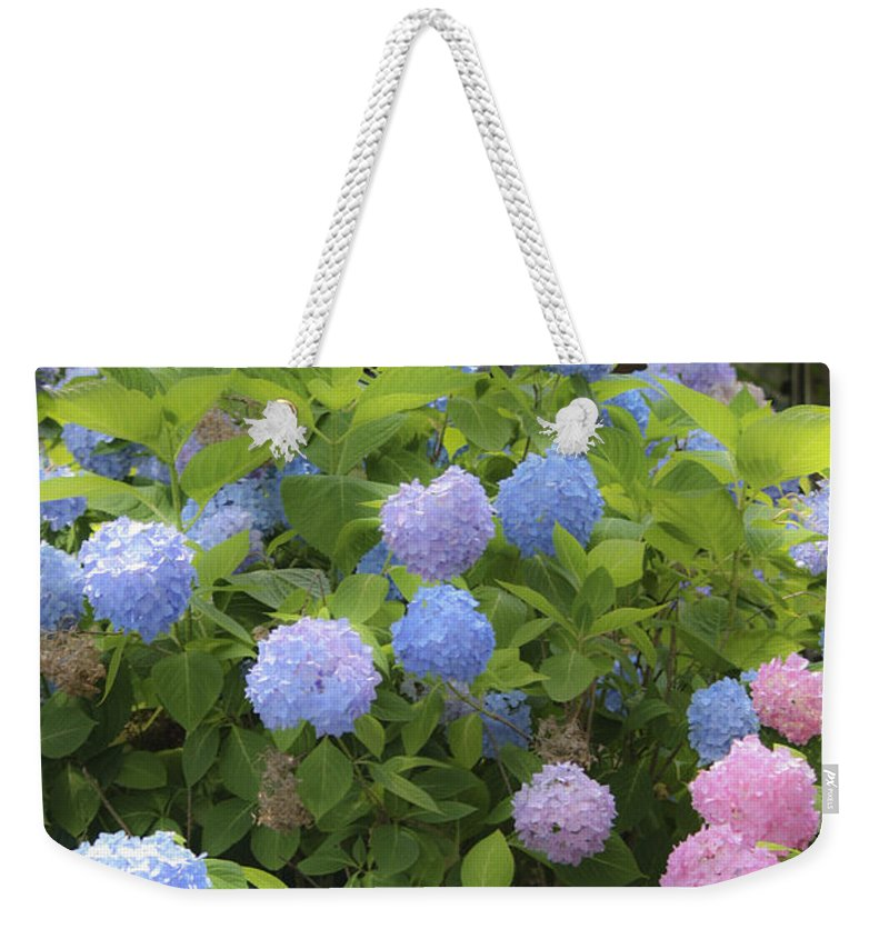 Hydrangea Weekender Tote Bag featuring the photograph Dreamy Blue And Pink Hydrangeas by Teresa Mucha