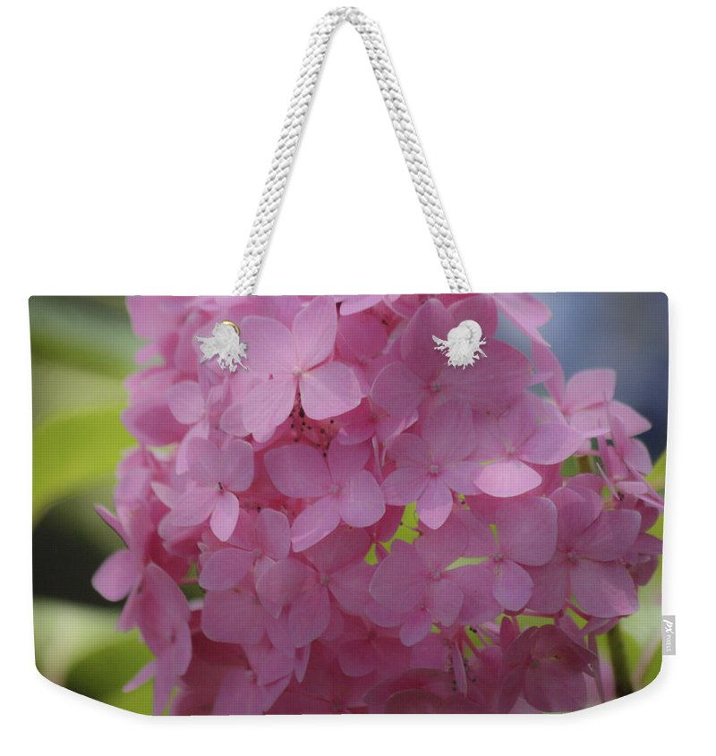 Hydrangea Weekender Tote Bag featuring the photograph Dreamy Pink Mophead Hydrangea Squared by Teresa Mucha