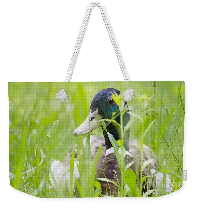 Duck Weekender Tote Bag featuring the photograph Duck In The Green Grass by Mats Silvan