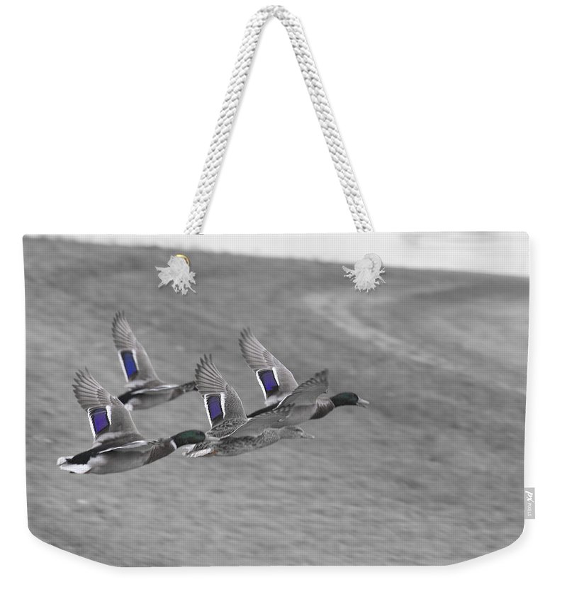 Ducks In Flight Weekender Tote Bag featuring the photograph Ducks In Flight V1 by Douglas Barnard