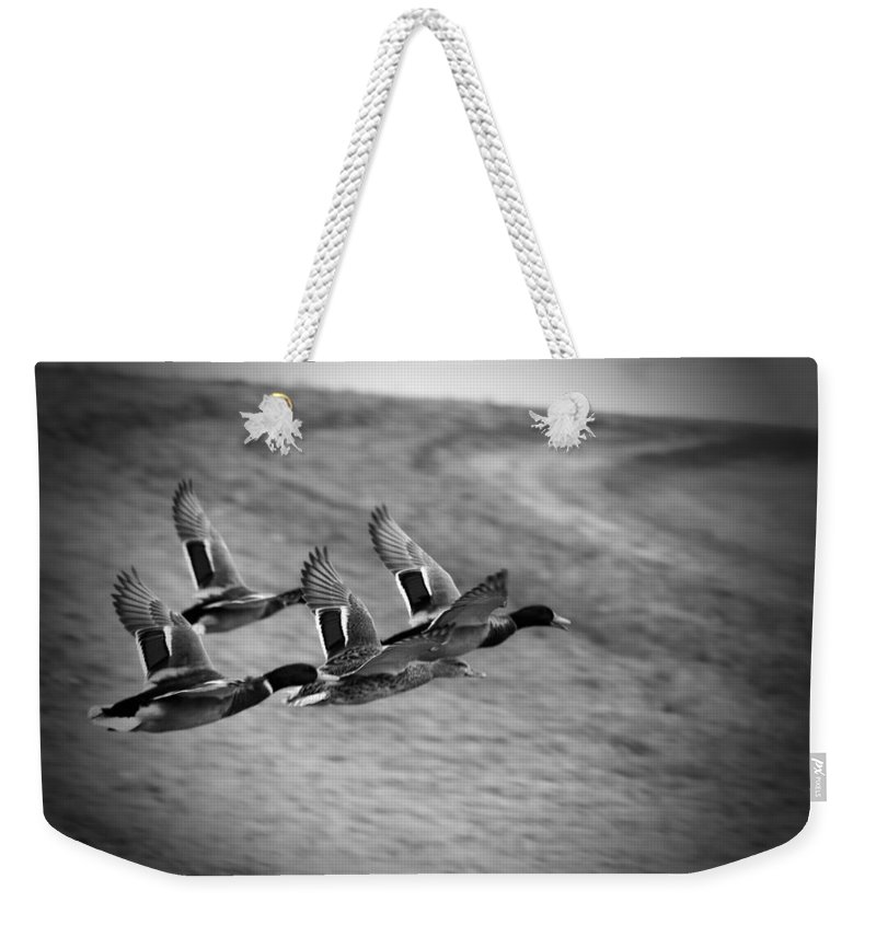 Ducks In Flight Weekender Tote Bag featuring the photograph Ducks In Flight V2 Bw by Douglas Barnard