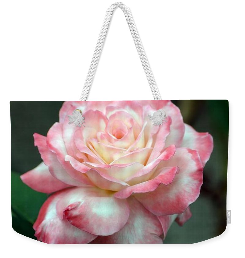 Roses Weekender Tote Bag featuring the photograph Dusty Pink by Living Color Photography Lorraine Lynch