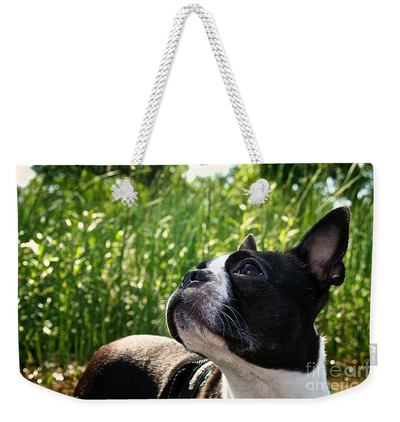 Pet Weekender Tote Bag featuring the photograph Eagle Scouting by Susan Herber