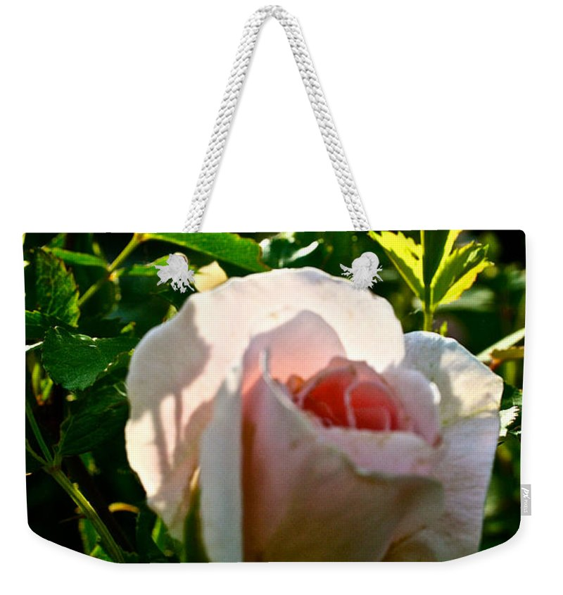 Plant Weekender Tote Bag featuring the photograph Early Rose by Susan Herber
