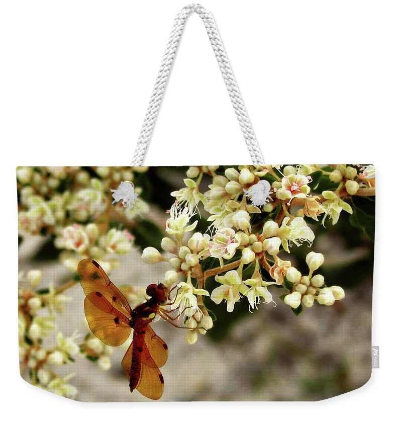 Nature Weekender Tote Bag featuring the photograph Eastern Amberwing On Wild Buckwheat by Peg Urban