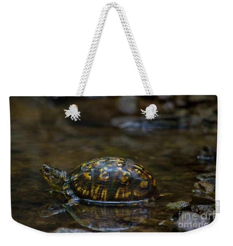 Scott Weekender Tote Bag featuring the photograph Eastern Box Turtle by Scott Hervieux
