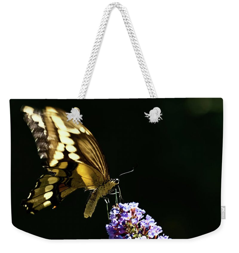 Eastern Tiger Swallowtail Papilio Glaucus Weekender Tote Bag featuring the photograph Eastern Tiger Swallowtail Butterfly On Butterfly Bush by Onyonet Photo Studios