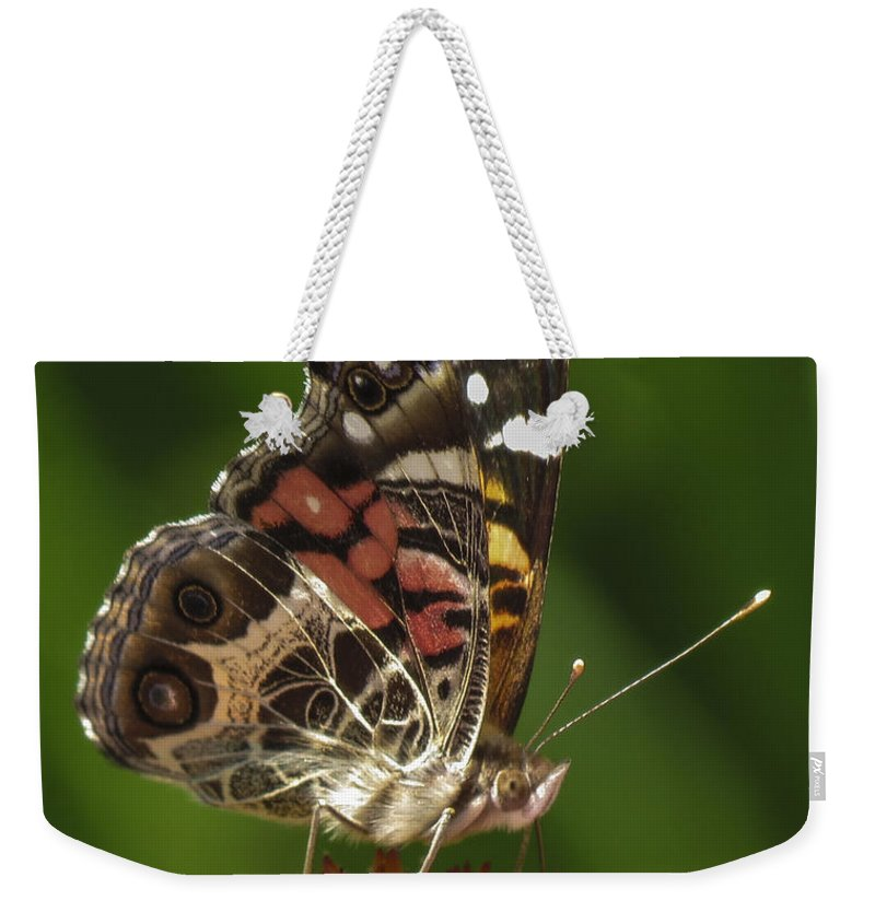 Echinacea Weekender Tote Bag featuring the photograph Echinacea Butterfly Meal by Darleen Stry