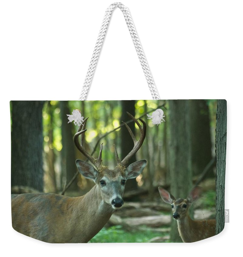Animal Weekender Tote Bag featuring the photograph Eight Point And Fawn_9532_4367 by Michael Peychich