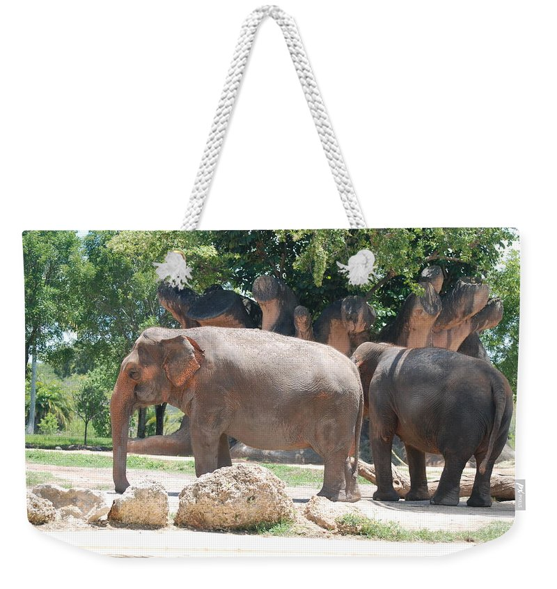 Animal Weekender Tote Bag featuring the photograph Elephants by Rob Hans