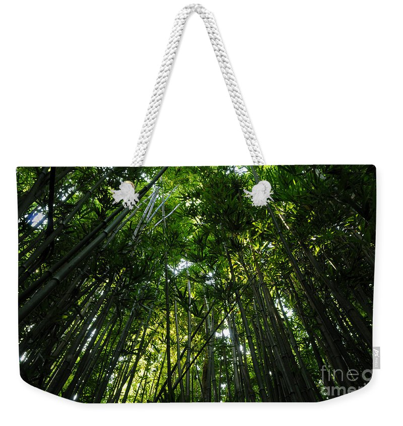 Enchanted Forest Weekender Tote Bag featuring the photograph Enchanted Forest Haleakala National Park by Vivian Christopher