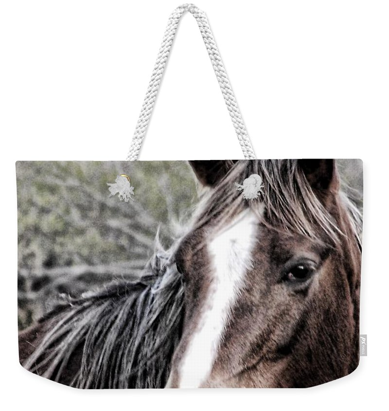 Horse Weekender Tote Bag featuring the photograph Equine Trance by Christy Leigh