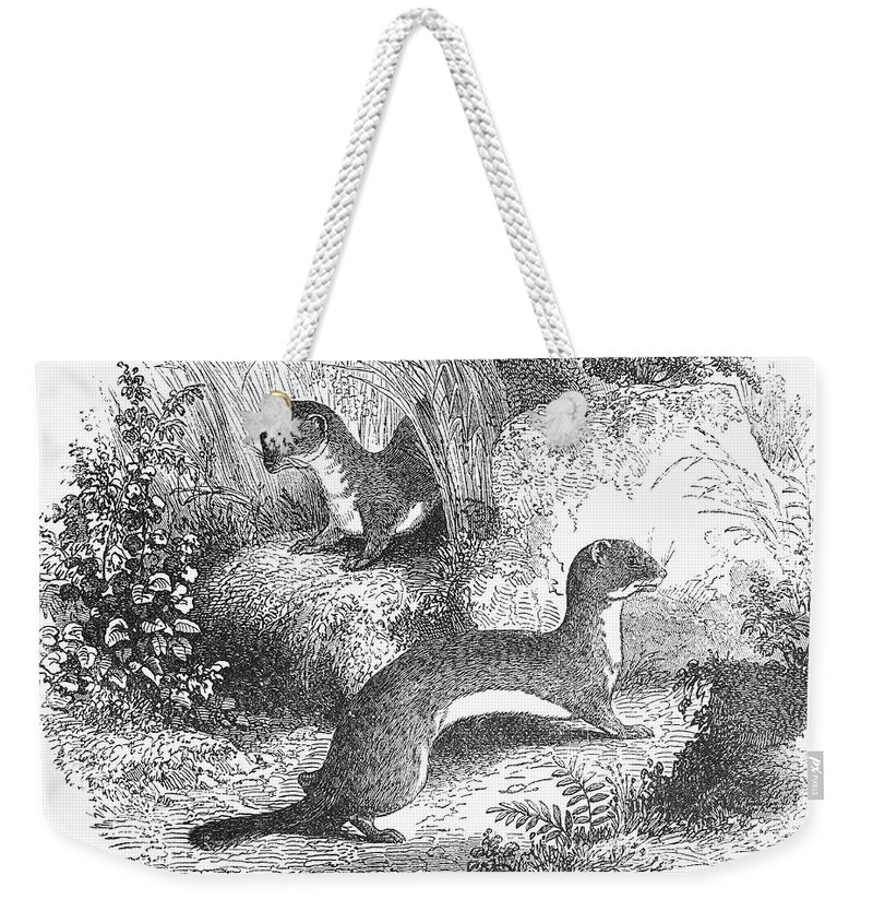 19th Century Weekender Tote Bag featuring the photograph Ermines In Summer by Granger