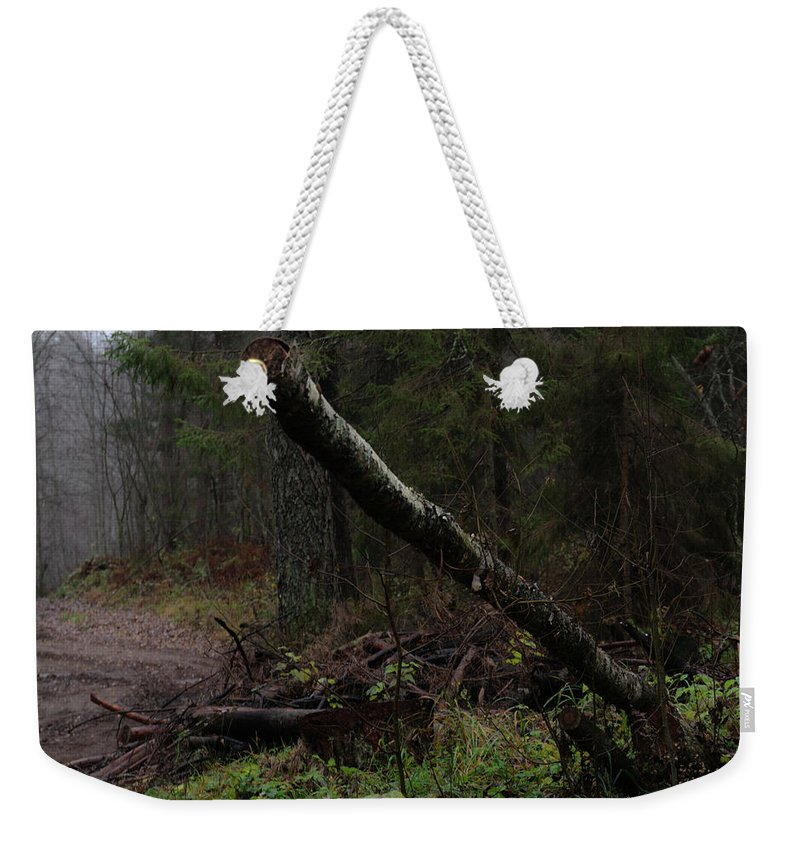 Autumn Weekender Tote Bag featuring the photograph Evening In A Pine Forest by Michael Goyberg