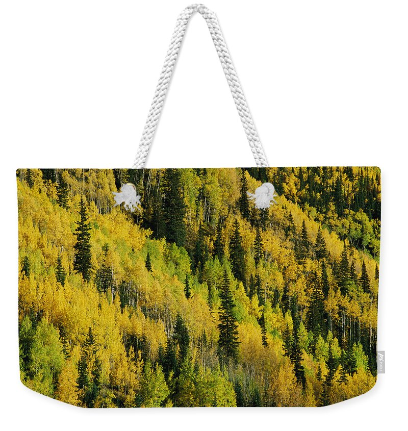 Red Mountain Weekender Tote Bag featuring the photograph Evergreen And Quaking Aspen Trees by Marc Moritsch