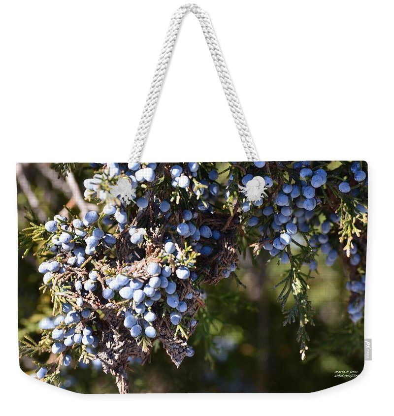 Evergreen Weekender Tote Bag featuring the photograph Evergreen by Maria Urso
