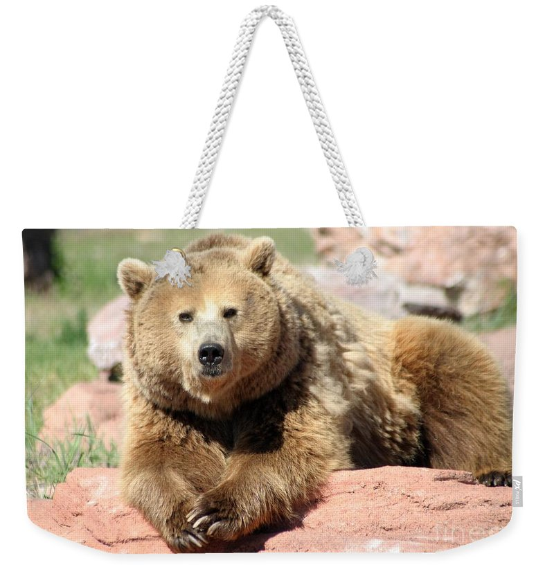 Bear Weekender Tote Bag featuring the photograph Eye To Eye by Living Color Photography Lorraine Lynch