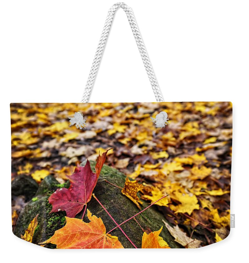 Leaves Weekender Tote Bag featuring the photograph Fall Leaves In Forest by Elena Elisseeva