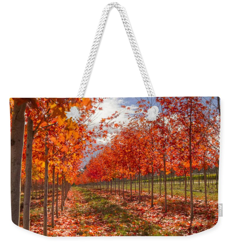 Tree Weekender Tote Bag featuring the photograph Fall Line Up by Jean Noren