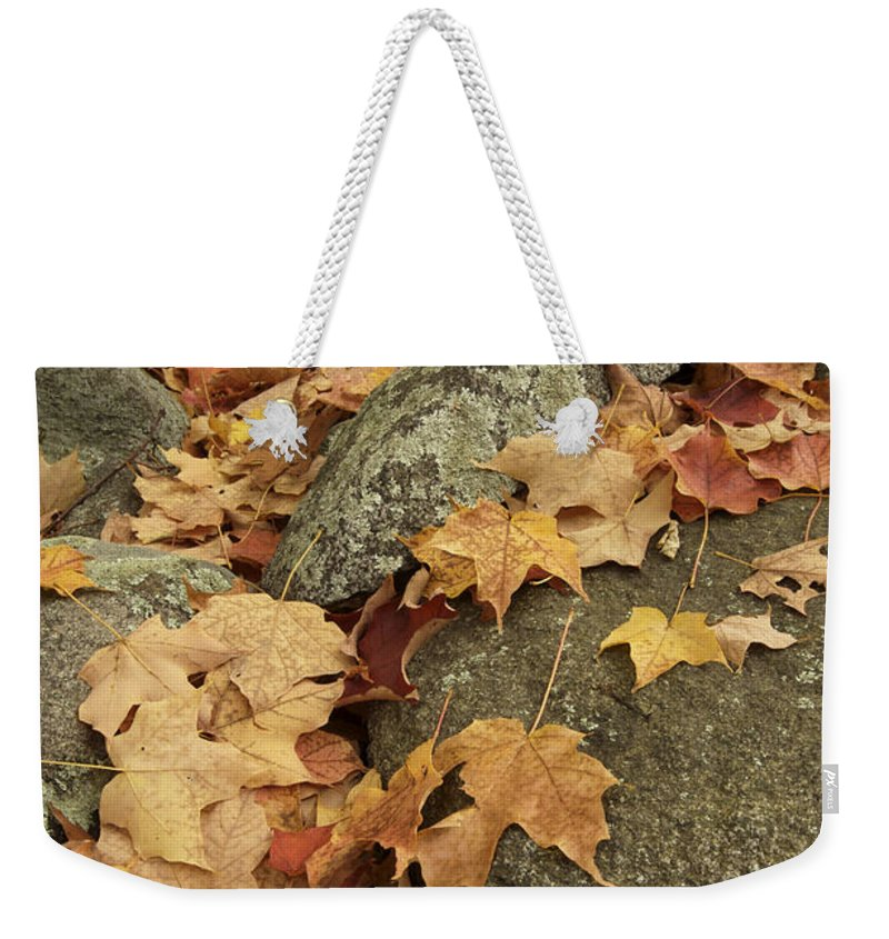 Lincoln Weekender Tote Bag featuring the photograph Fallen Autumn Sugar Maple Leaves by Tim Laman