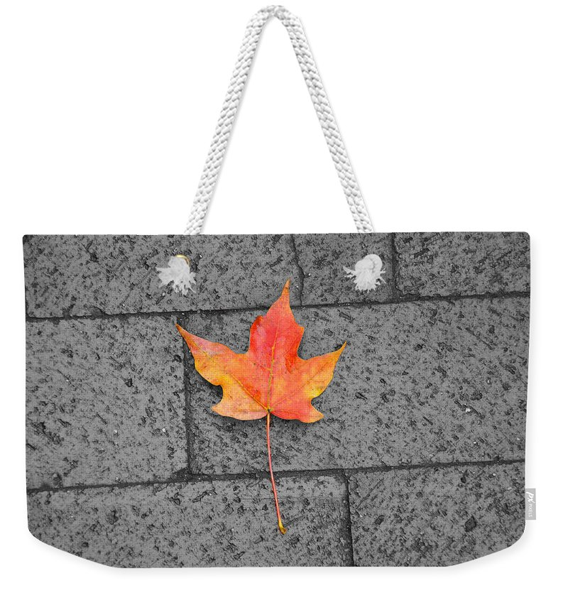 Washington Dc Weekender Tote Bag featuring the photograph Fallen Leaf by Brittany Horton