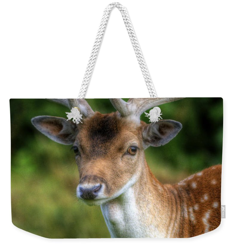 Deer Weekender Tote Bag featuring the photograph Fallow Deer by Yhun Suarez