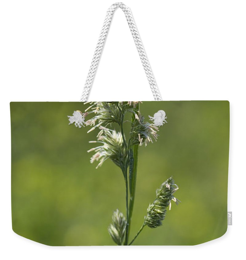 Phalaris Arundinacea Weekender Tote Bag featuring the photograph Feathery Reed Canary Grass Vignette by Kathy Clark