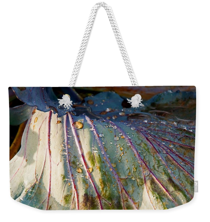 Cabbage Weekender Tote Bag featuring the photograph Feeling Fresh by Christine Stonebridge