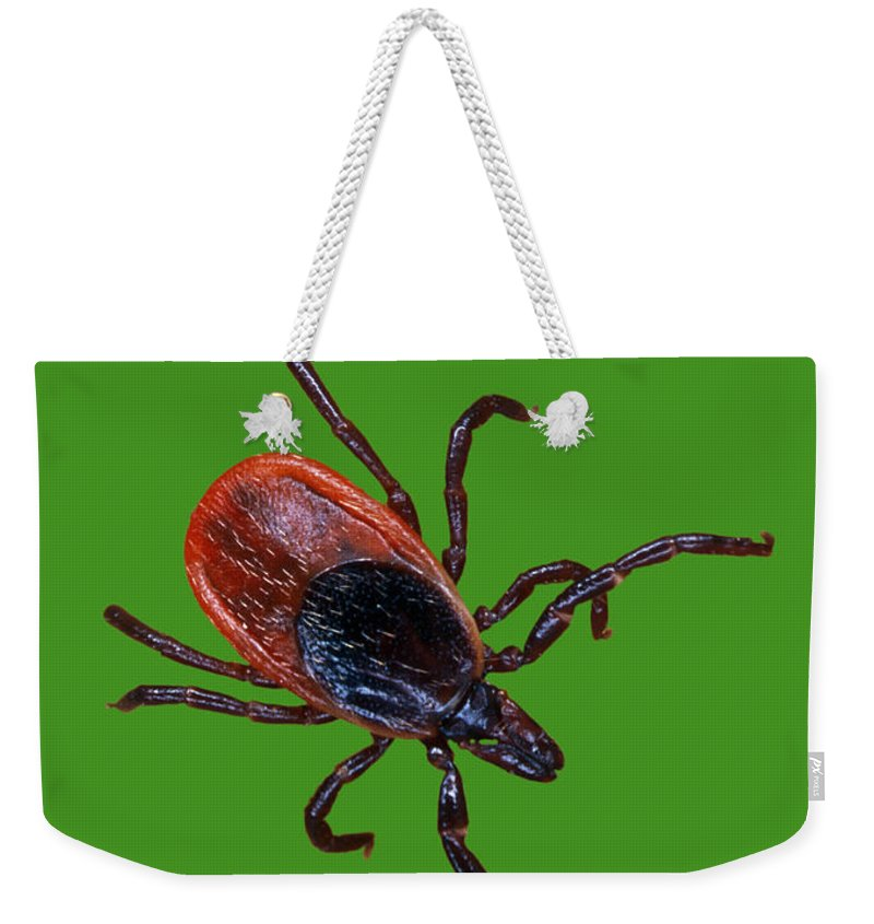 Animal Weekender Tote Bag featuring the photograph Female Blacklegged Tick by Science Source