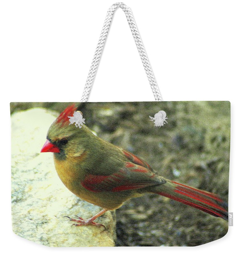 Northern Cardinal Weekender Tote Bag featuring the photograph Female Northern Cardinal by Laurel Talabere