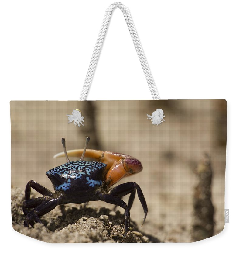 Pacific Islands Weekender Tote Bag featuring the photograph Fiddler Crab Living In A Sandy Tidal by Tim Laman