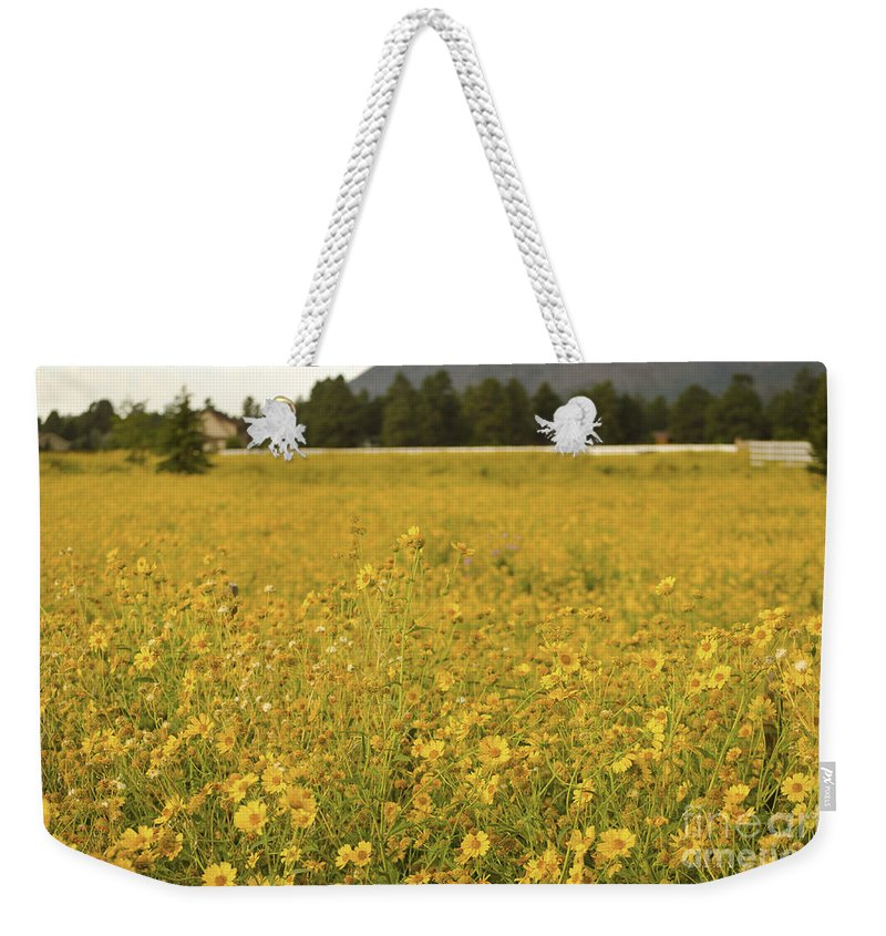 Fine Art Weekender Tote Bag featuring the photograph Field Of Yellow Daisy's by Donna Greene