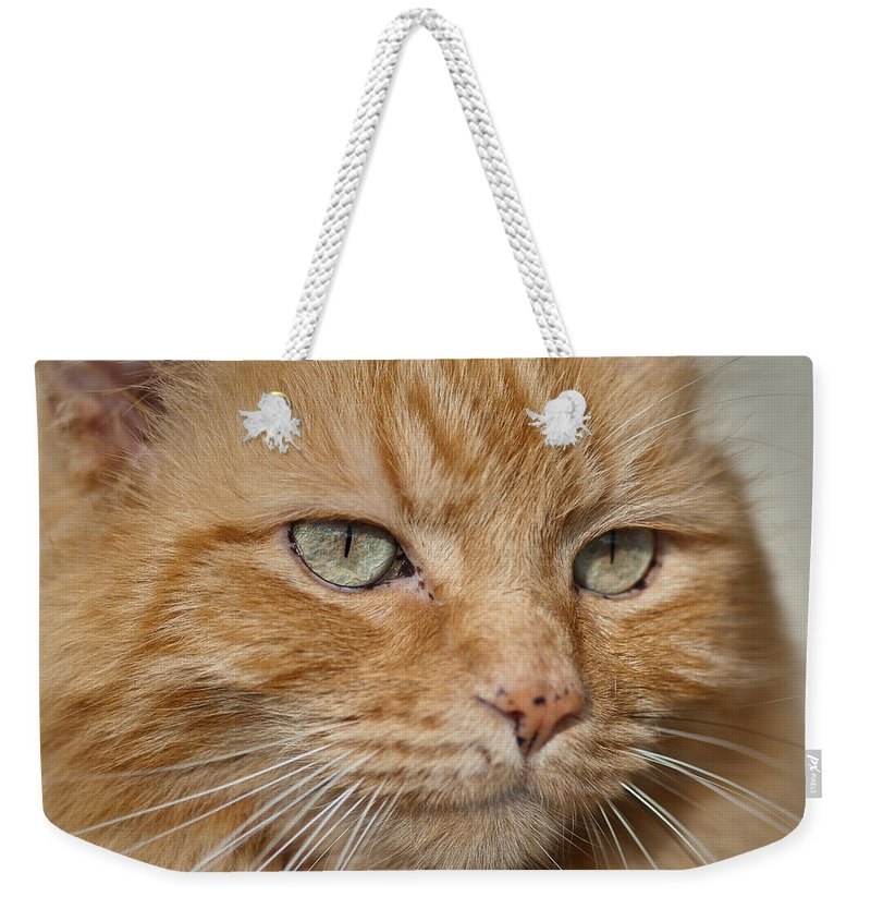 Cat Weekender Tote Bag featuring the photograph Fierce Warrior Kitty by Greg Nyquist
