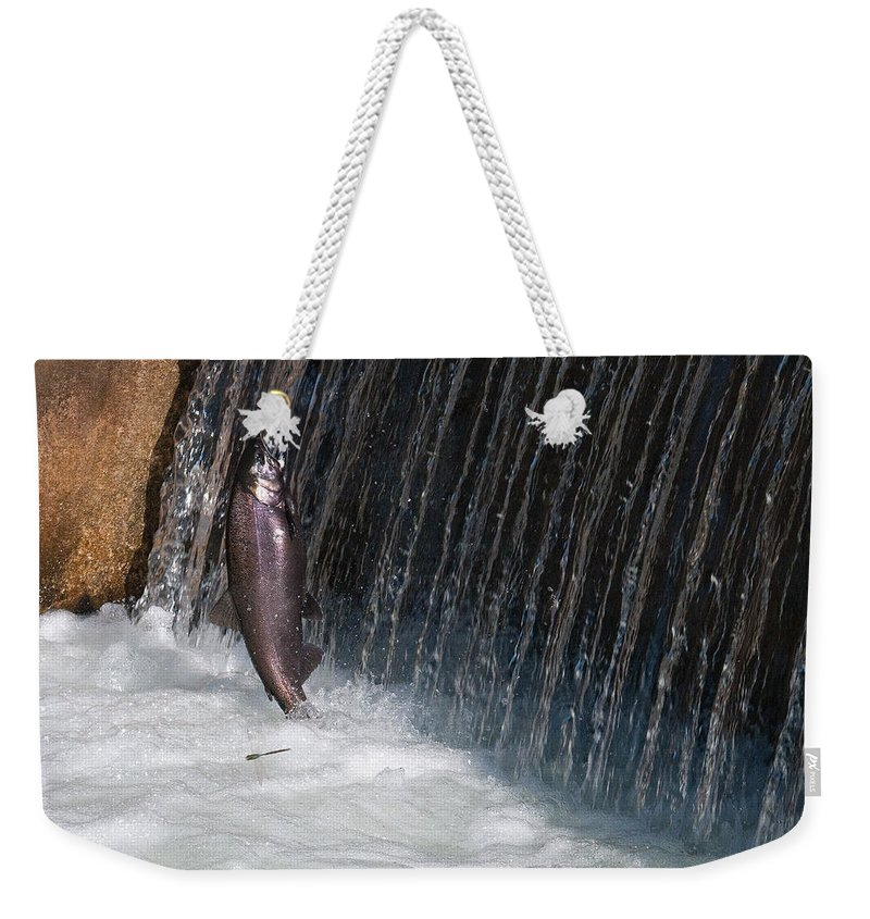 Fish Weekender Tote Bag featuring the photograph Fighting Upstream by David Arment