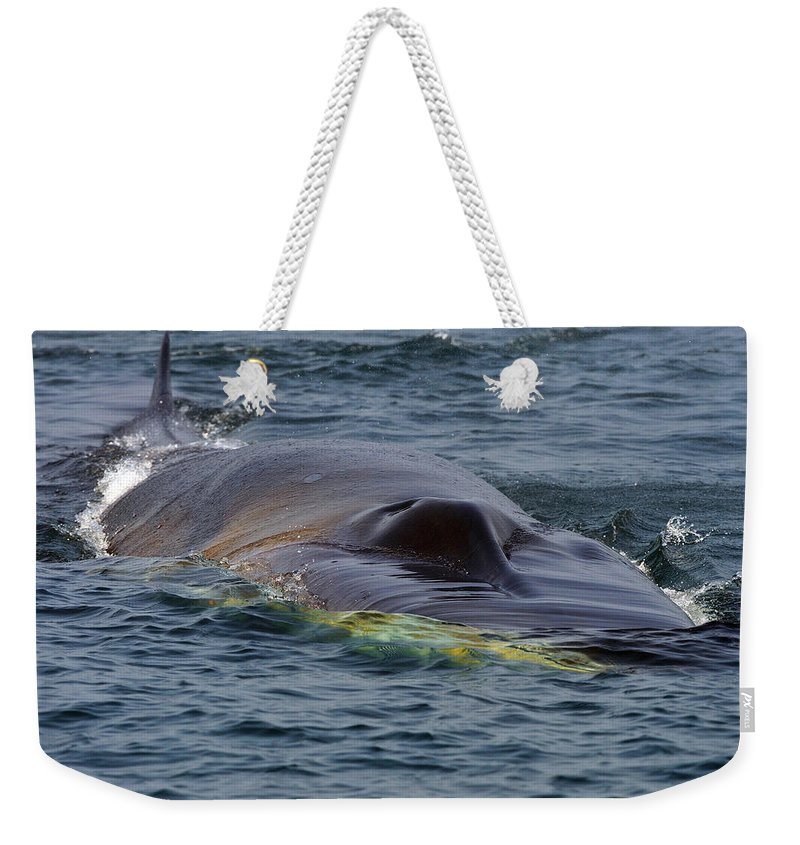 Fin Whale Weekender Tote Bag featuring the photograph Fin Whale Charging by Tony Beck